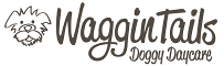 WagginTails Dog Daycare, Puppy Pre-School & Dog Training Central Coast